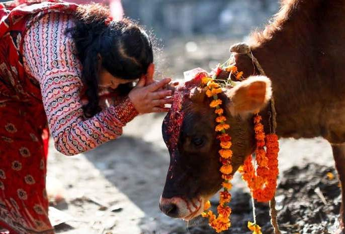 The government's concrete step for the protection of cows will be the formation of the Go Cabinet in MP shivraj singh chauhan | गायींच्या संरक्षणासाठी सरकारचं ठोस पाऊल, 'गो कॅबिनेट'ची स्थापना होणार