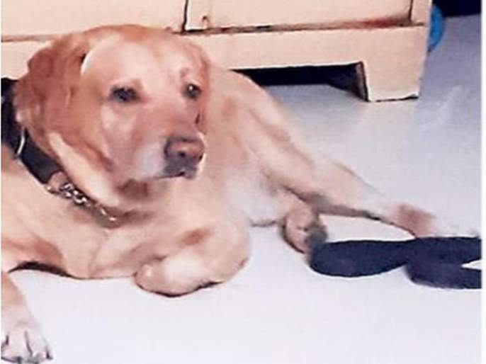 Lucky Dog escapes with unknown; Filed a complaint at the police station   लकीला लघुशंका करताना पळवलं; पोलीस ठाण्यात तक्रार दाखल