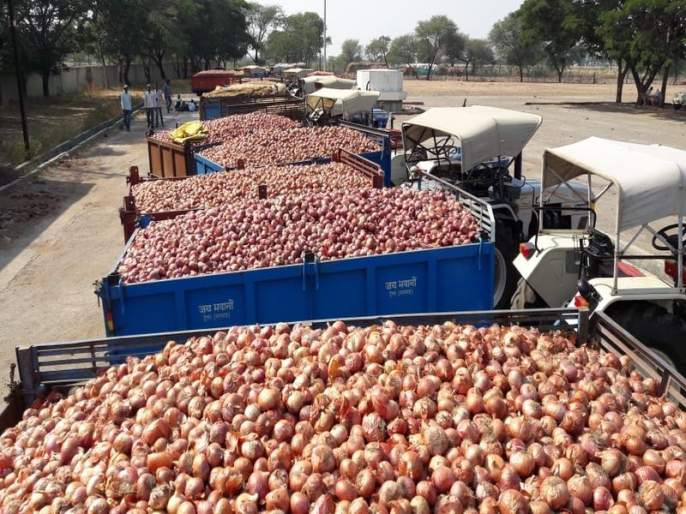 Nashik : onion price rate collapsed due to drought, farmers in trouble | कांद्याचा वांधा संपेना !