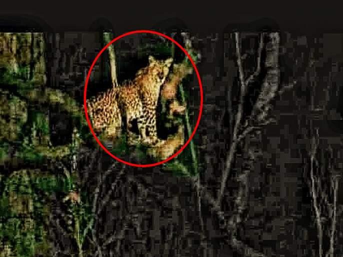 Citizens of Bhokarpada, Moho village under leopard fear pda | भोकरपाडा, मोहो गावातील नागरिकबिबट्याच्या दहशतीखाली