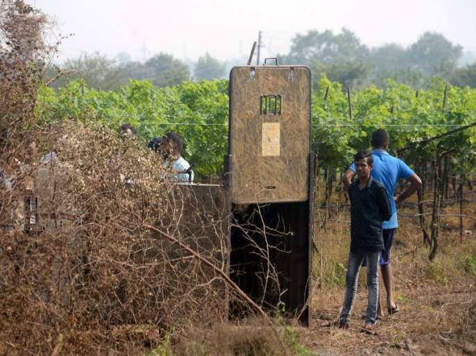 Cage posted: Bibeta's sight near Manje's sugarcane farm | पिंजरा तैनात : मौजे मानूरच्या ऊसशेतीजवळ बिबट्याचे दर्शन