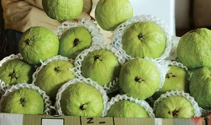 Peru also dominates the fruit market; 3 tonnes arrives daily in Mumbai   फळांच्या बाजारात पेरूचाही दबदबा;मुंबईत दररोज ५० टन आवक