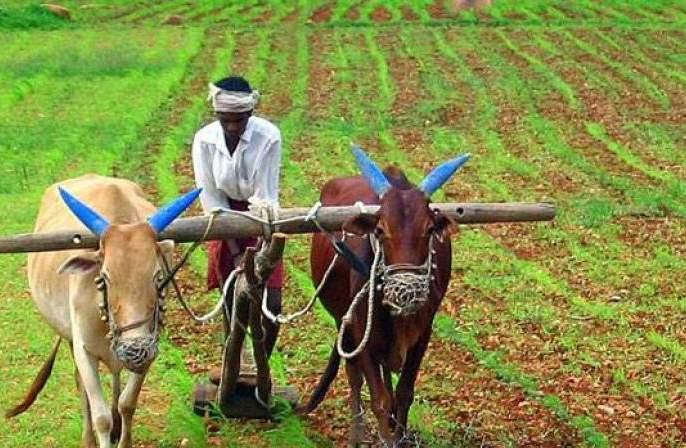 Will free market and contract system benefit farmers?   मुक्तबाजार व करारपद्धतीमुळे शेतकऱ्यांचा फायदा होईल का?