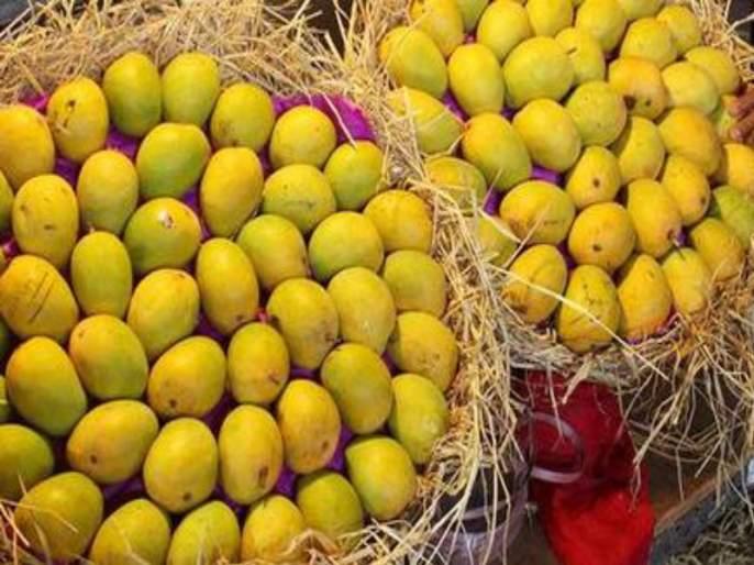 Mangoes increasing in the market yard | मार्केट यार्डात आंब्याची आवक वाढली