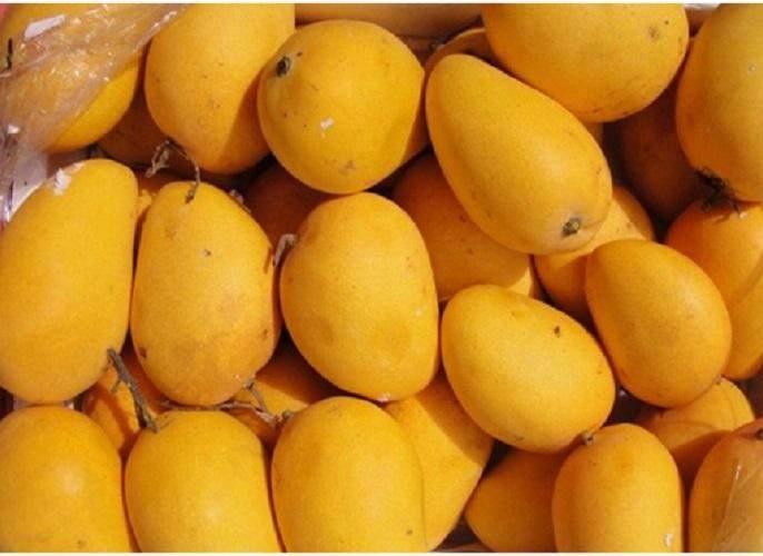 Mango prices fall in Nagpur | नागपुरात आंब्याचे भाव घसरल्याने खवय्यांना दिलासा
