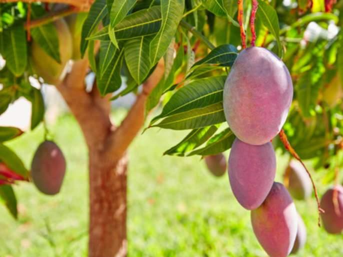 No matter how big the ego, small looks before humility; Read the quarrel between the mango tree and the grass | अहंकार असो कितीही मोठा, नम्रतेपुढे दिसतो छोटा; वाचा आम्रवृक्षाचे व गवताच्या पातीचे भांडण