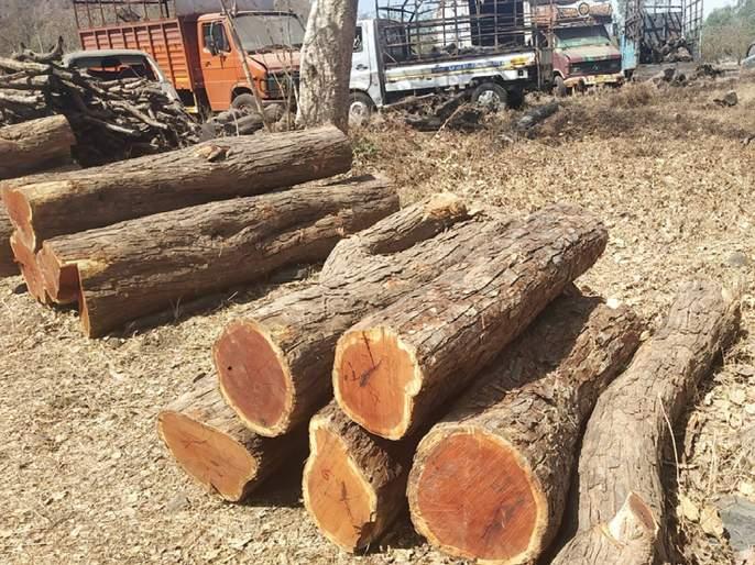 Khaira slaughtered in the forest of Kokaner | कोकनेरच्या जंगलात खैराची कत्तल