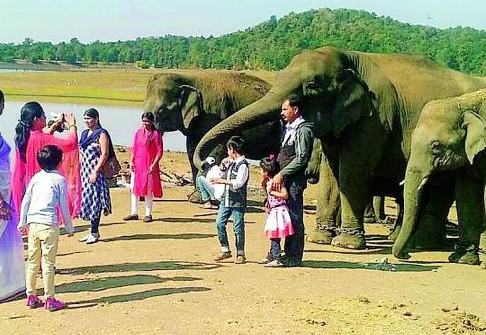 Kamalapur Elephant Camp | कमलापूरचा हत्ती कॅम्प