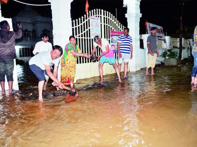 Water entering the house .. The condition of Solapur   सोलापूर शहरात मुसळधार पाऊस; घराघरात शिरलं पाणी.. सोलापूरकरांची अवस्था केविलवाणी