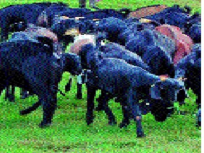 Sheila-Sheep Camps will be announced in Miraj-Jat taluka.   शेळी-मेंढी छावण्यांची घोषणा ठरणार मृगजळ -जत तालुक्यातील परिस्थिती :
