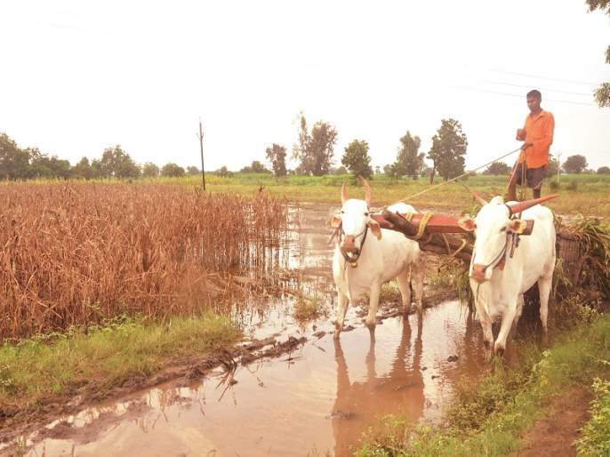 Even after ten days, the crops in the fields remained in the water | दहा दिवस उलटूनही शेतातील पिके पाण्यातच