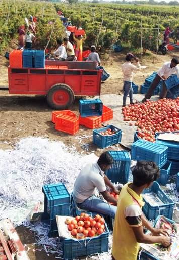 After seeing photos of pomegranate, Bangladeshi businessmen reached Bairagwadi   डाळिंबाचे फोटो पाहून बांगलादेशीचे व्यापारी पोहोचले बैरागवाडीत