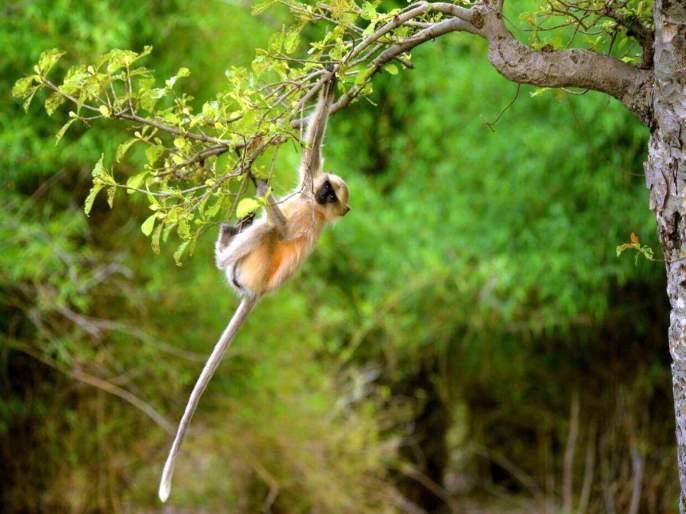 Bite nine of the Mokat monkeys | मोकाट माकडाचा नऊ जणांना चावा