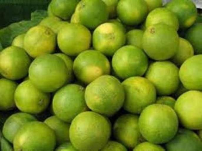 bad effect on orchards due to bad weather after heavy rains   अतिवृष्टीनंतर खराब हवामानामुळे फळबागांवर संक्रांत