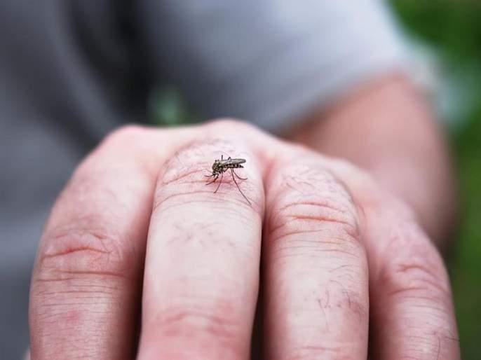 Nashik: Dengue partner alerts municipality in Nashik | नाशिक मध्ये डेेंग्यूच्या साथीमुळे महापालिका सतर्क