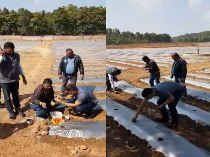 Video : Mahendra Singh Dhoni becomes a farmer; Doing organic farming svg | Video : क्रिकेटपासून दूर असलेला महेंद्रसिंग धोनी बनला शेतकरी; करतोय सेंद्रीय शेती