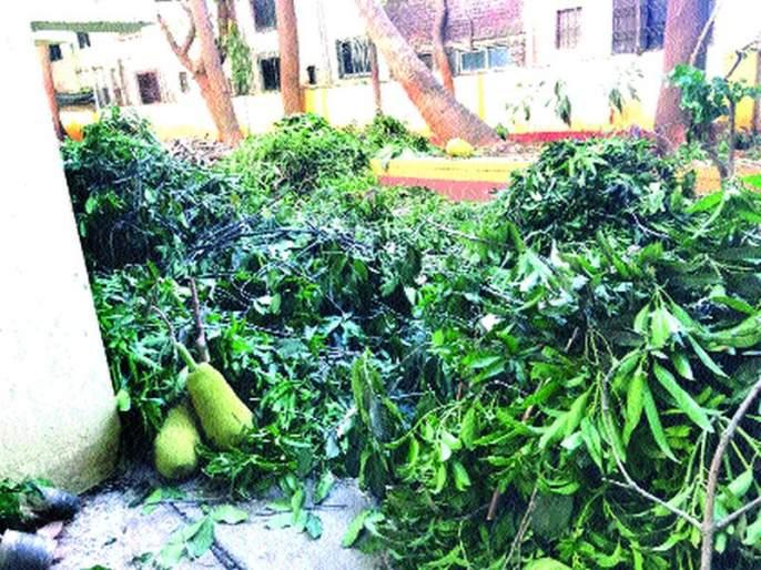 Mango, jackfruit, coconut pruning in the dispute between the two societies | दोन सोसायट्यांच्या वादात आंबा, फणस, नारळाच्या झाडांची छाटणी