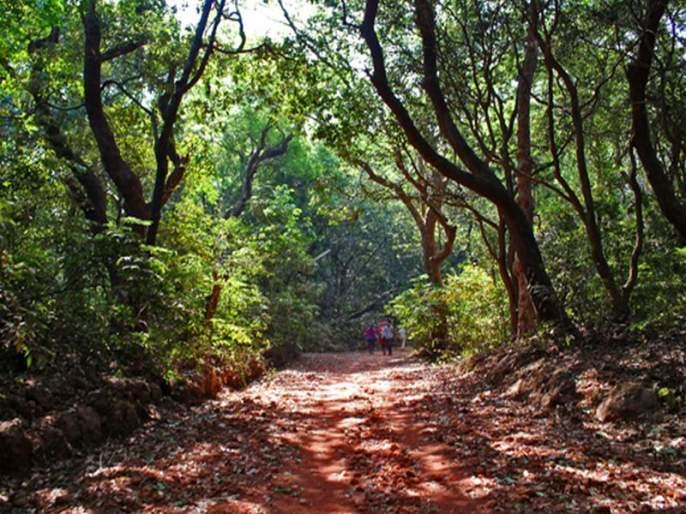 Youth Day Special: A young man from Mumbai has been involved in cleanliness, protection of trees, environment conservation | युवा दिन विशेष : स्वच्छता, झाडांचे संरक्षण, पर्यावरण संवर्धनासाठी मुंबईतील युवक सरसावले