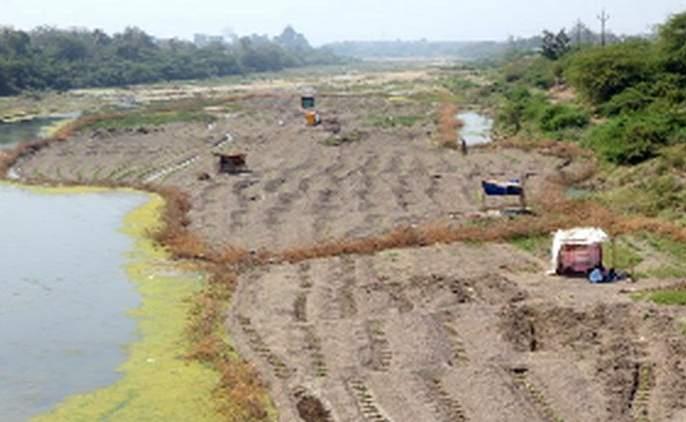Conservation of sand deposits due to paddy fields | डांगर मळ्यांमुळे वाळू साठ्याचे संवर्धन