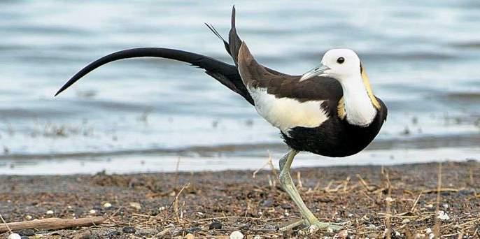 Navegaon dam neglected despite registration of 310 birds | ३१० पक्ष्यांची नोंद असूनही नवेगाव बांध उपेक्षित