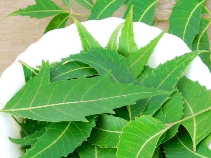 Amazing health and beauty benefits of neem   कडूलिंबाचे हे आरोग्यदायी फायदे तुम्हाला माहीत आहेत का?