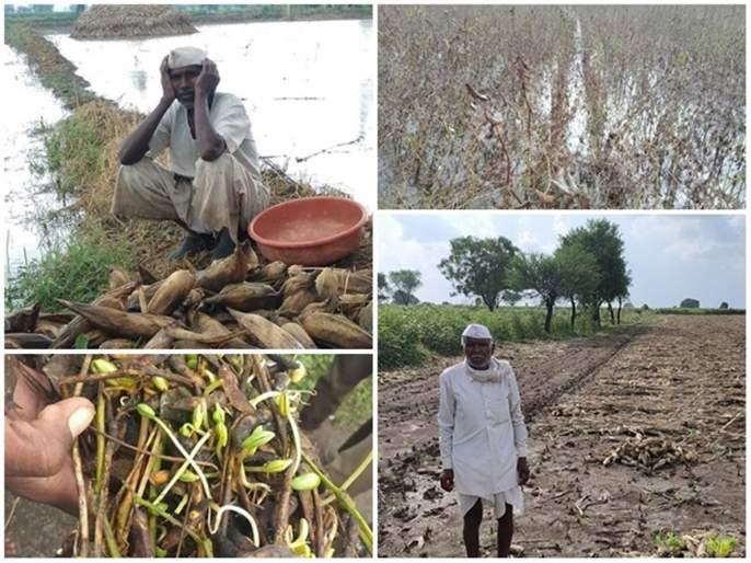 The Wet drought challenges the new government   नव्याने येणाऱ्या सरकारसमोर ओल्या दुष्काळाचे आव्हान