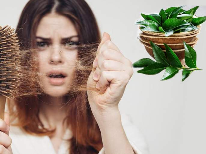 Curry leaves home remedies to reduce hair fall | केसगळती अन् कोड्यांपासून मिळवा नेहमीची सुटका, कढीपत्त्याचा असा करा वापर!