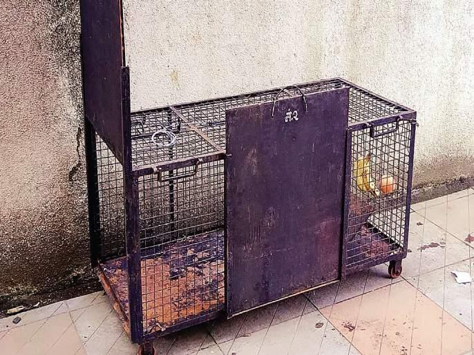 Trapped cage | माकडाला पकडण्यासाठी लावलेला पिंजरा निष्फळ