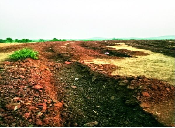 Planting of trees, money and spirit; - Pictures of Hatkanangale taluka | झाडे लावा पैसे जिरवा प्रवृत्ती बोकाळली-:हातकणंगले तालुक्यातील चित्र