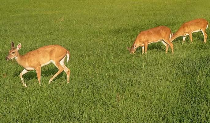 Nuisance of wild animals is beyond the control of the forest department | वन्यप्राण्यांचा उच्छाद वनविभागाच्या नियंत्रणाबाहेर