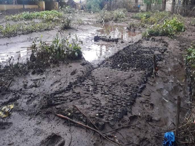 One and a half lakh seedlings in forest department nurseries | वनविभागाच्या रोपवाटिकांमधील दीड लाख रोपांचे नुकसान