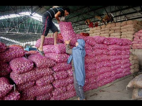 Onion is getting higher rates in Solapur Market Committee | सोलापूर बाजार समितीत कांद्याला मिळतोय उच्चांकी दर
