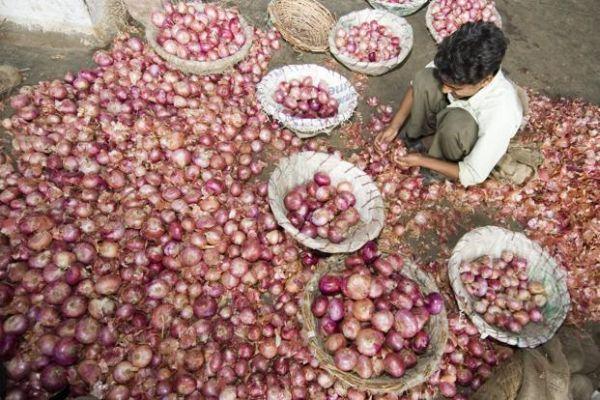 Apples are more expensive than basmati in Mumbai Market Committee | मुंबई बाजार समितीमध्ये सफरचंद, बासमतीपेक्षाही कांदा महाग