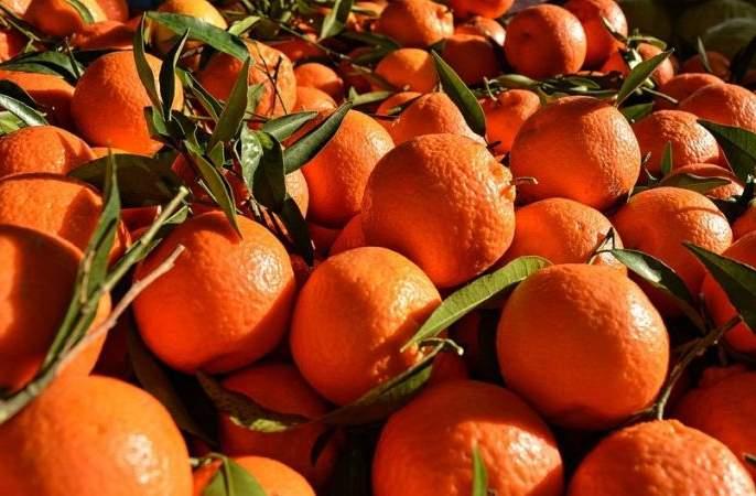 One crore rupees worth of oranges were sold by a broker   शेतकऱ्यांचा एक कोटी रुपयांचा संत्रा दलालाने परस्पर विकला