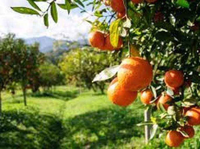 Orchard will grow in 111 hectares in Washim taluka! | वाशिम तालुक्यात १११ हेक्टर क्षेत्रात फुलणार फळबागा !