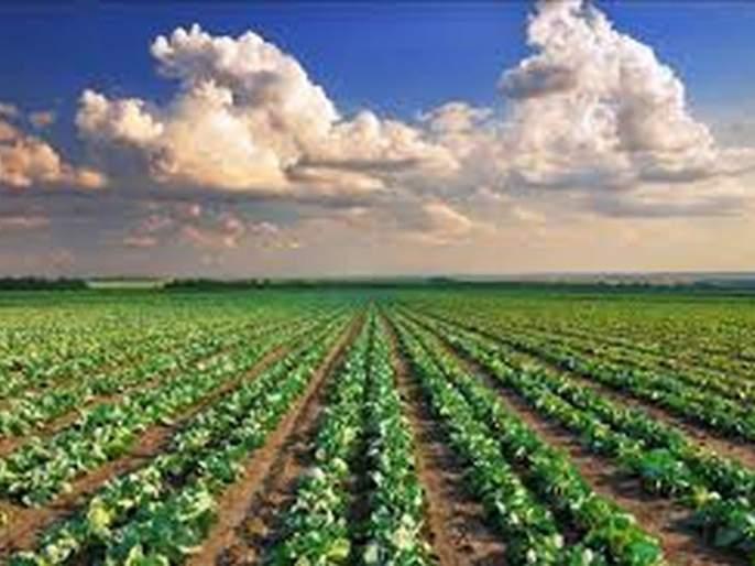Emphasis on implementing organic farming mission in Akola district! | अकोला जिल्ह्यात जैविक शेती मिशन राबविण्यावर भर!