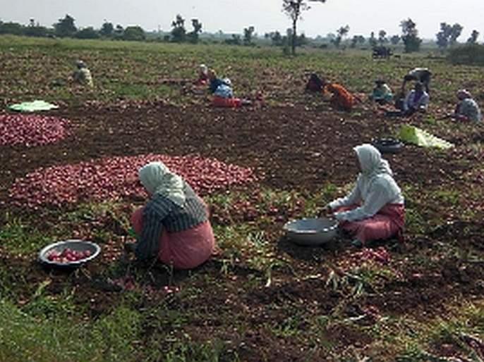 Onions are on sale in the State | कांद्याची परराज्यात होतेय विक्री