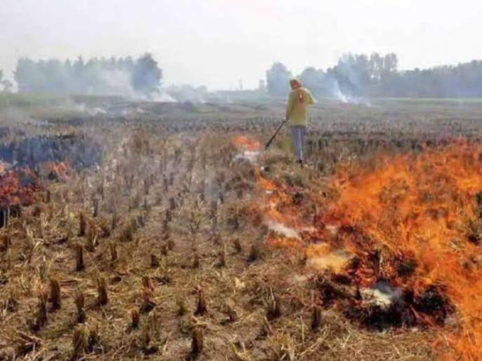 supreme court orders incentives for punjab haryana and up farmers rs 100 per quintal | पराली न जाळण्यासाठी शेतकऱ्यांना प्रतिक्विंटलला 100 रुपये द्या- सर्वोच्च न्यायालय