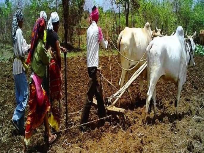 Rabbi sowing on one and half lakh hectares in Marathwada | मराठवाड्यात दीड लाख हेक्टरवर रब्बीची पेरणी