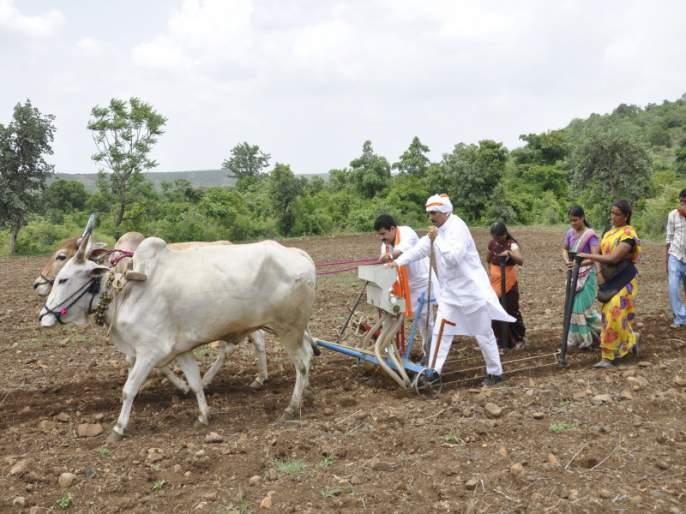 Over 100% Sowing of Rabbi: Good picture in Marathwada-Vidarbha | रब्बीच्या शंभर टक्क्यांहून अधिक पेरण्या : मराठवाडा-विदर्भात चांगले चित्र