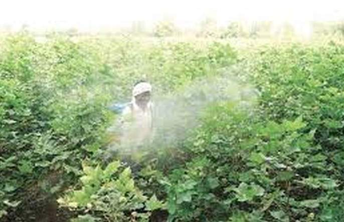 Use of insecticides on crops is dangerous! | जहाल कीटकनाशकांचा वापर ठरतोय घातक !