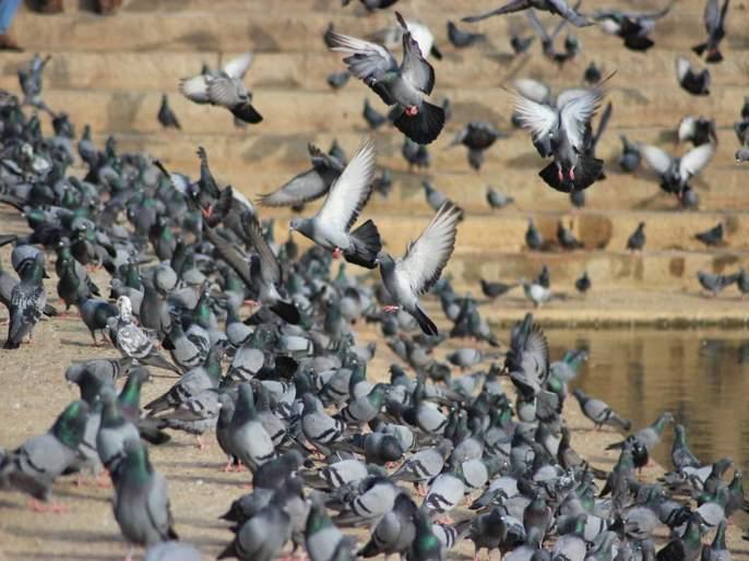 Goregaon Pravasi Sangh's pigeon removal campaign finally got success | गोरेगाव प्रवासी संघाच्या कबूतर हटाव मोहिमेला मिळाले अखेर यश