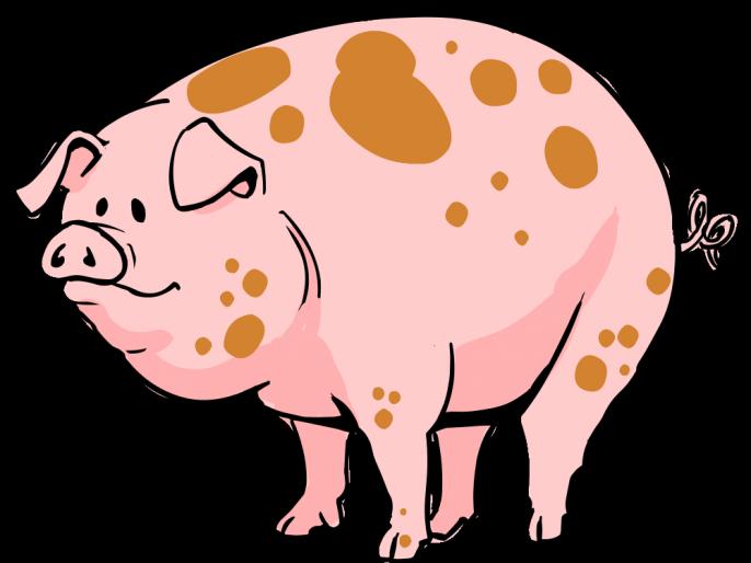 stone found in pig's stomach had more than crores value   डुकराच्या पोटातून मिळाला असा एक दगड ज्याची किंमत आहे कोटींच्या घरात