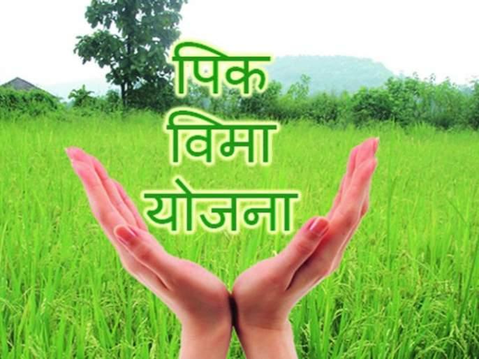 Lessons of farmers to Rabi Crop Insurance | रबी पीक विम्याकडे शेतकऱ्यांची पाठ