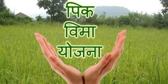 Insurance cover for crops on 1.69 lakh hectares! | १.६९ लाख हेक्टरवरील पिकांना विम्याचे कवच!