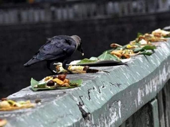 pitru paksha 2019 importance of crow in pitru paksha | Pitru Paksha 2019 : पितृपक्षात काकस्पर्श, काकदृष्टीचे 'हे' आहे महत्त्व