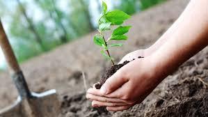 Let the trees grow and what do we do ...? | झाडे सरकारने लावायची आणि आम्ही काय करायचे...?