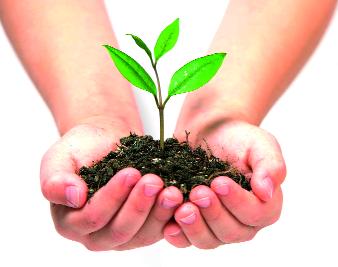 5 lakh saplings to be planted on Samrudhi Highway | समृद्धी महामार्गावर लावणार ५ लाख रोपे
