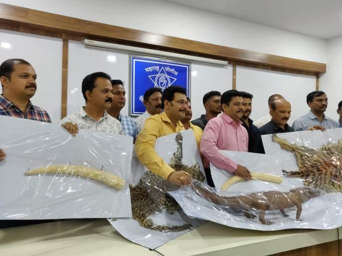 One arrested for smuggling 45 lakh wildlife animal's skin   ४५ लाखांच्या वन्यजीव प्राण्यांच्या कातड्यांची तस्करी करणाऱ्यास अटक