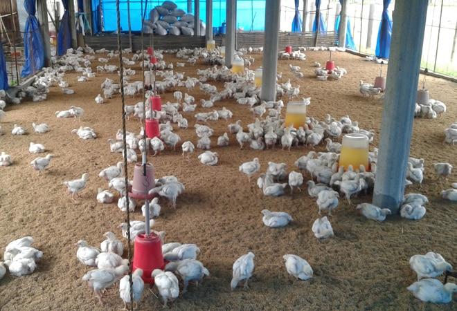 Seven squads in the district for bird flu control | बर्ड फ्लू नियंत्रणासाठी जिल्ह्यात सात पथके